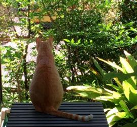 鎌倉「space TSUMUJI(つむじ)」の猫